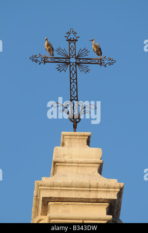 European White Storks CICONIA CICONIA alight and perch on cross above the Cathedral Catedral Valladolid Spain - Stock Photo