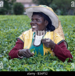Kenya, Kericho, Kericho. A Tea picker on an estate near Kericho, the main tea growing region of Kenya. Tea is Kenya's - Stock Photo