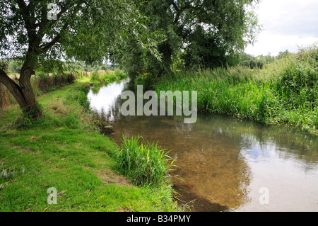 The river Pang in Pangbourne, Berkshire, UK showing willow tree and English riverside plants - Stock Photo
