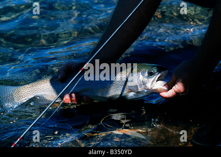 Kenya, Mt Kenya. A good sized rainbow trout caught on a fly on Lake Alice. - Stock Photo