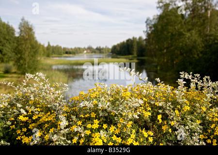 Yellow flowers blooming on bridge parapet - Stock Photo