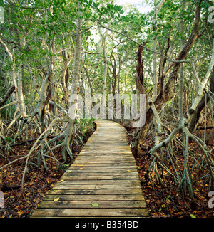 Wooden boardwalk, J.N. 'Ding' Darling National Wildlife Refuge, Sanibel Island, Florida, USA - Stock Photo