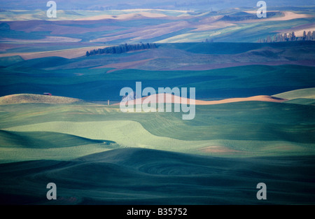Palouse farmlands as seen from Steptoe Butte, Washington State - Stock Photo