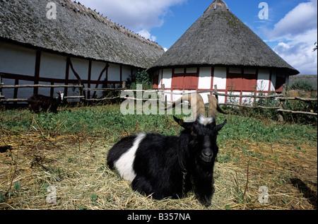 Denmark Odense Den Fynske Landsby The Funen Village goat - Stock Photo