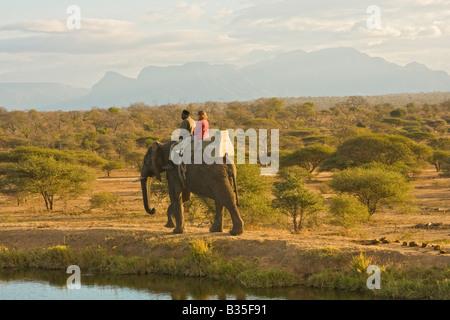 Elephant safari ride at Camp Jabulani upscale safari game park near Hoedspruit South Africa - Stock Photo