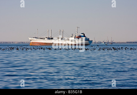 Line of cormorants in front of ship in Walvis Bay just south of Swakopmund - Stock Photo