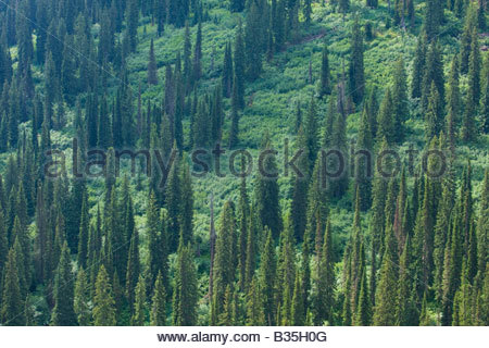 Across valley view of a sub alpine forested hillside in roadless area of Kaniksu National forest. - Stock Photo