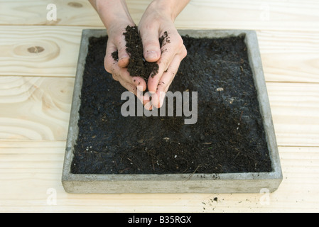 Handful of gardening soil above a tray full of dirt - Stock Photo