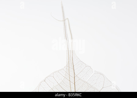 Translucent leaves, close-up - Stock Photo