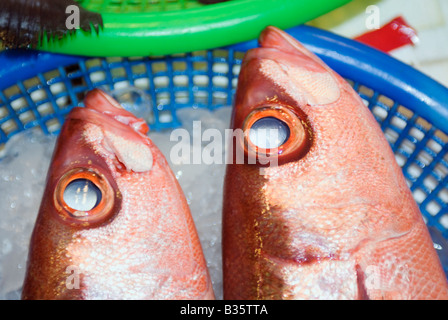 Red Snapper fish on ice in fish market - Stock Photo