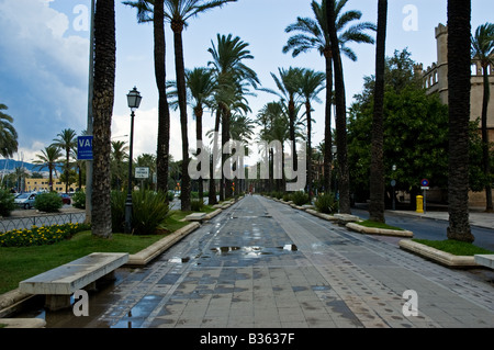 A Pedestrianised Boulevard lined with Palm Trees after a storm in Palma de Mallorca - Stock Photo