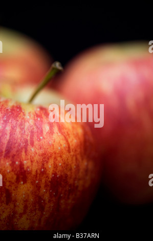 Malus domestica. Royal Gala apples against a black background - Stock Photo
