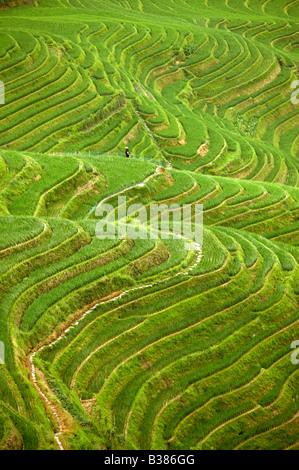 Ping An Rice Terraces Longsheng Longji Guilin China Building started in Yuan dynasty 1271 1368 - Stock Photo