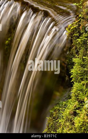 Fern Spring Yosmeite National Park California USA - Stock Photo