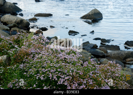 Diversity in Swedish flora, west coast - Stock Photo