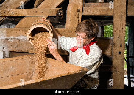 UK Cheshire Stretton medieval mill interior miller pouring grain into hopper for grinding - Stock Photo