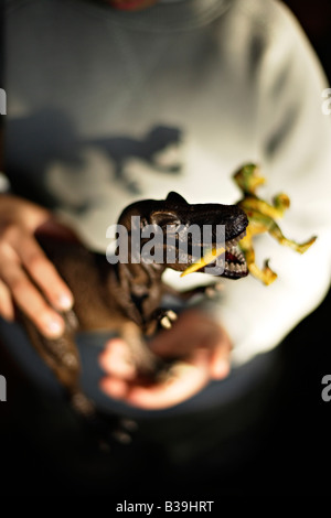 Model Tyrannosaurus rex in hands of six year old boy eating another toy dinosaur a Velociraptor - Stock Photo