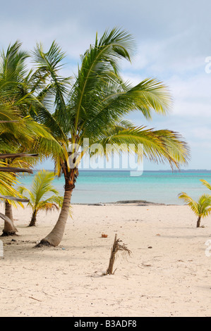 A view of tropical beach with coconut palm trees - Stock Photo