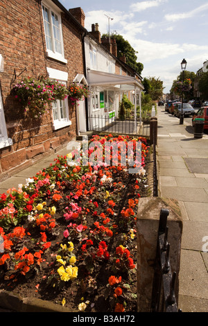 UK Cheshire Tarporley High Street colourful begonias in terraced house front garden - Stock Photo