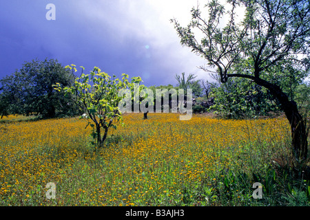 Beautiful spring scene in Portugal's Algarve just after rain. Wildflowers, olive, carob and fig trees - Stock Photo