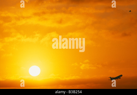 an aircraft taking off in front of the sunrise with a bird mirroring the plane, Heathrow, London, UK - Stock Photo