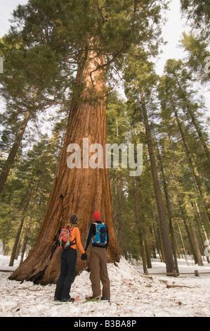 Couple Hiking in Mariposa Grove, Yosemite National Park, California, USA - Stock Photo