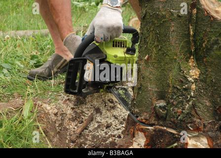 Man using chain saw to cut plum tree - Stock Photo