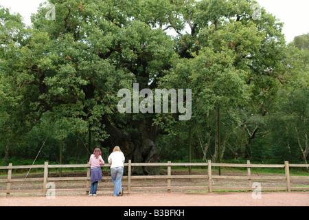 Sherwood Forest Country Park Edwinstowe Mansfield Nottinghamshire England GB UK 2008 - Stock Photo