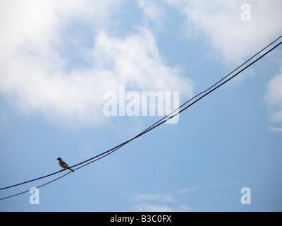 Bird on a telephone wird - Stock Photo