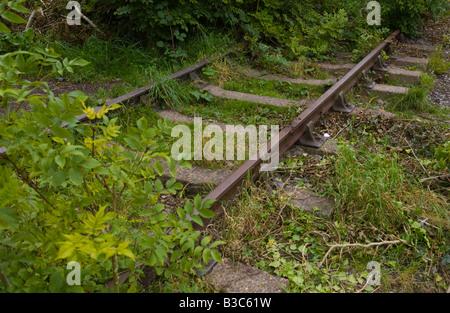 Overgrown disused railway line UK - Stock Photo