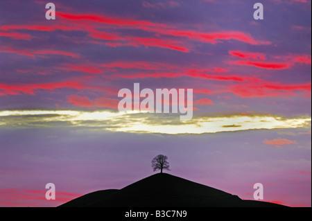 Linden tree (Tilia sp.),bare tree in winter at sunset, Switzerland - Stock Photo
