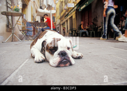Dog sleeping on street - Stock Photo