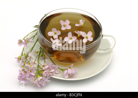 medicinal tea made of Bog pink cuckoo flower Lady s smock milkmaids fresh blossoms and cup of tea herb medicinal - Stock Photo
