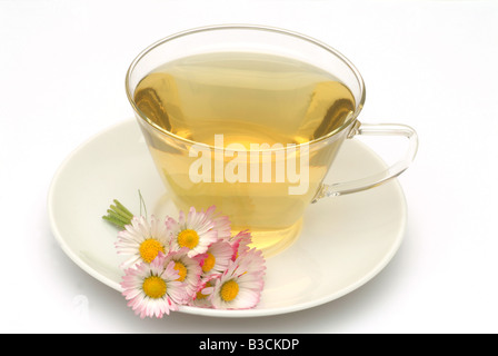 medicinal tea made of Daisy fresh blossoms and cup of tea herb medicinal plant Margheritina dei prati Pratolina - Stock Photo
