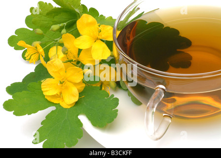 Chelidonium majus majur medicinal plant tea Celandine Celidonia infuso te - Stock Photo