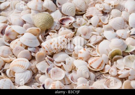 Various seashells, full frame - Stock Photo