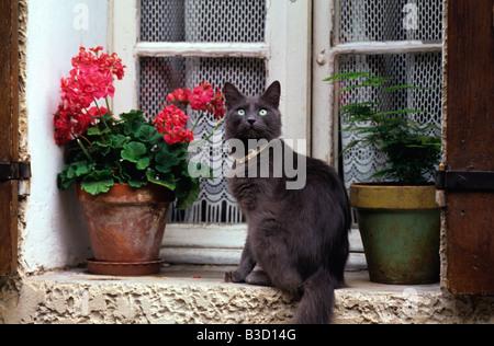 Black cat sitting on a window ledge - Stock Photo