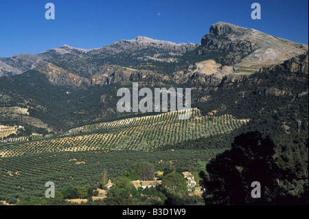 View from pass Puerto de Tiscar olive groves in Sierra Segura Andalusia Jaen Province Spain - Stock Photo