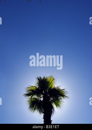 The top of a palm tree in clear blue sky - Stock Photo