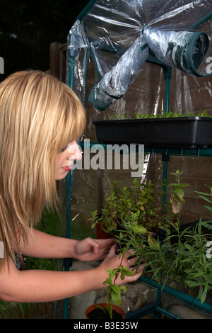 young blonde haired woman late teens early twenties tending pots of home grown herbs in a mini greenhouse in a garden - Stock Photo