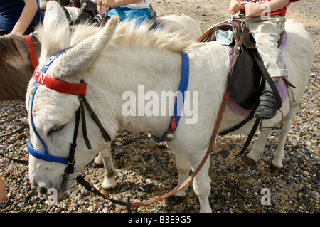 Donkey Ride's on Llandudno beach - Stock Photo