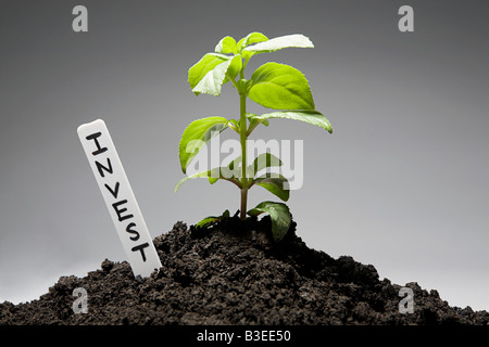 Sapling with invest label - Stock Photo