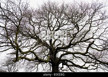Bare tree - Stock Photo