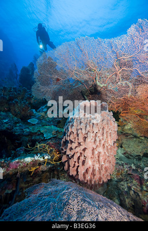 Coral reef and scuba diver - Stock Photo