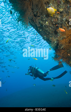 Scuba diver and fish - Stock Photo