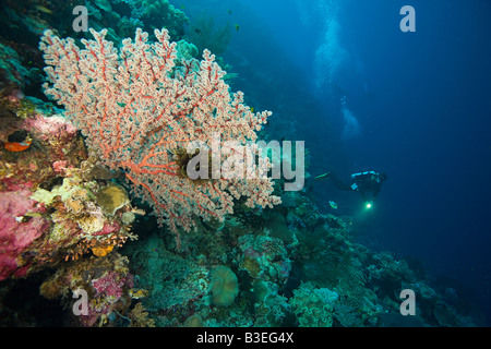 Scuba diver at coral reef - Stock Photo