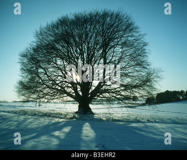 Tree and snow covered ground - Stock Photo