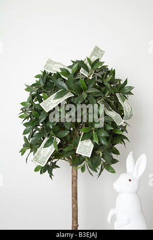 Money on a tree - Stock Photo