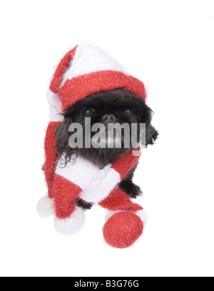 red christmas hat on a black and white cow fun xmas greeting card