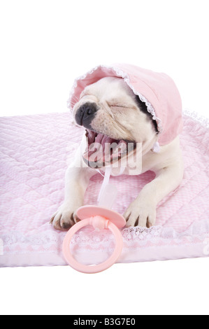 Very ugly baby french bulldog puppy crying on pink blanket wearing bonnet with big pacifer isolated on white - Stock Photo